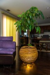 Mebo Banana Indoor Planter Lamp in San Clemente, California