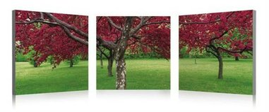 Big Red Tree 3 Piece Photographic Print on Canvas Set in Kingwood, Texas