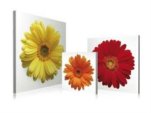 Tri-Colour Daisies 3 Piece Photographic Print on Canvas Set in The Woodlands, Texas