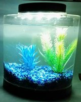 Betta fish tank with light, gravel, accessories in Bellaire, Texas