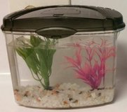 ** Betta fish tank with gravel and accesories in Galveston, Texas