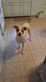Pit mix for sale 150 obo in Hinesville, Georgia