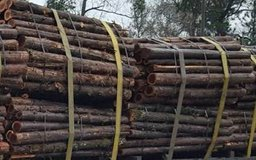 Missouri Cedar Posts for sale- No Minimum Order- Pick up in Humble, TX in Conroe, Texas