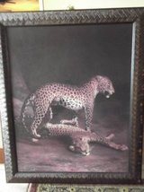 Leopard Picture in Las Cruces, New Mexico