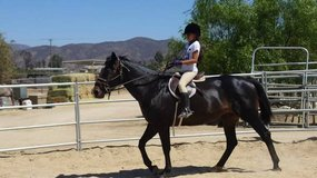 10 year old Quarter Horse in Vista, California