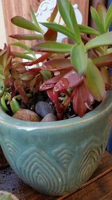 Beautiful new glazed pot with campfire succulents in Vista, California