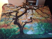 Large framed Banyan tree print in Sacramento, California