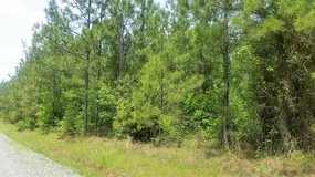 7 acres with pond! Price reduced! in Leesville, Louisiana