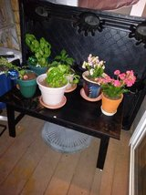 short long table that hold my plants it is not solid wood black table - furniture - by owner - sale in Roseville, California