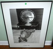 Framed Art - A Dog's Life in Chicago, Illinois