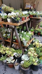 Succulents,potted succulents,ground cover,etc. in Camp Pendleton, California