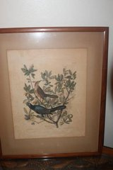 Antique 1937 Audubon Print Boat Tailed Grackle in Houston, Texas