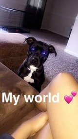 Re-homing of 15 month old Boxer mix in Indianapolis, Indiana