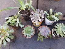 Healthy variety of succulents at lower prices in Camp Pendleton, California