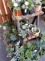 Large variety of Succulents and arrangements at lower prices in Camp Pendleton, California
