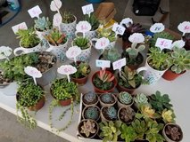 Succulents and drought tolerant plants at low prices in Oceanside, California