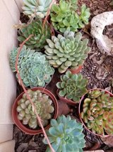 Healthy and low priced succulents and drought tolerant plants in Oceanside, California