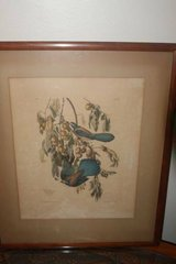 "Framed Audubon ""Florida Jay"" Print 1937 in Spring, Texas"