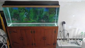 55 Gallon Fish Tank & Stand & Accessories in Glendale Heights, Illinois