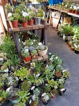 Low priced and large variety of healthy succulents and plants in Camp Pendleton, California