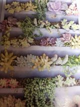 Succulents for verticals and other arrangements in Camp Pendleton, California