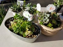 Inexpensive succulent arrangements in time for Mother's Day! in Camp Pendleton, California
