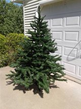Christmas Tree for Sale *Reduced* in Fort Leonard Wood, Missouri