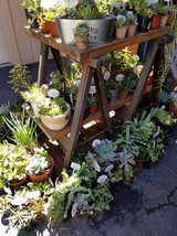 Succulents,Society Garlic, Iris,etc. lower than retail prices Open on Sunday too! in Camp Pendleton, California