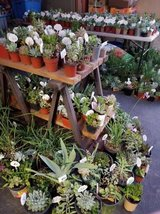 Open July 4th! 100's of lower than retail succulents and some drought tolerant plants in Temecula, California