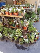 Lower priced healthy succulents and drought tolerant plants in Camp Pendleton, California