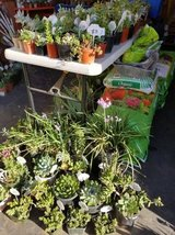 Open every day from 9am-5:30pm Sundays too! Succulents at low prices in Camp Pendleton, California