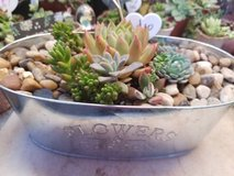Succulents at low prices in Camp Pendleton, California