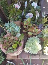 Open every day from 9am-7pm Sundays too! Succulents at low prices in Camp Pendleton, California