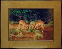African Impala International Award Winning Photography Limited Ed. in Lake Elsinore, California