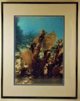 Sea Fan Coral International Award Winning Photographer Limited Ed. in Lake Elsinore, California