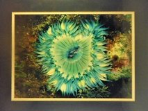 Sea Zoanthids International Award Winning Photographer Limited Edition in Lake Elsinore, California