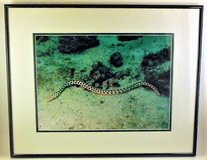 Ocean Sea Snake Limited Edition Inter. Award Winner Photographer in Lake Elsinore, California