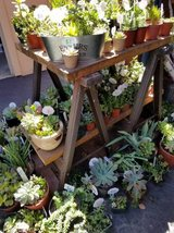 Open on Sunday until  6pm Lower than retail succulents in Oceanside, California