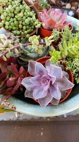 Open every day from 9:30am-4:30pm Sundays too! Succulents at low prices in Temecula, California