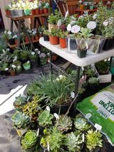 Wide variety of lower than retail succulents and plants in Oceanside, California