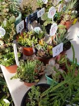 Variety of succulents and plants at lower than retail prices in Temecula, California