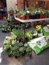 Variety of succulents and plants at lower than retail prices in Camp Pendleton, California