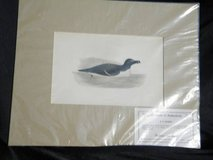19th Cent matted Litho's Ducks and Rooster in Camp Lejeune, North Carolina