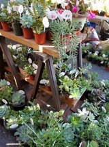 Low priced succulents and arrangements in Camp Pendleton, California