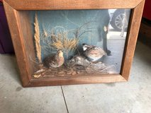 Quail Box in Baytown, Texas