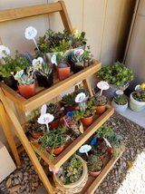100's of low priced succulents,arrangements,plants,etc. in Camp Pendleton, California