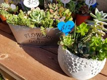 Mother's Day succulent arrangements at low prices in Camp Pendleton, California