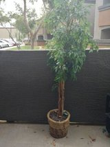 Artificial Ficus tree in Phoenix, Arizona