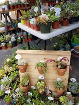 Succulents,arrangements and drought tolerant plants in Camp Pendleton, California