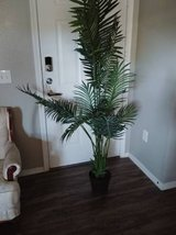 Large artificial fern in Phoenix, Arizona